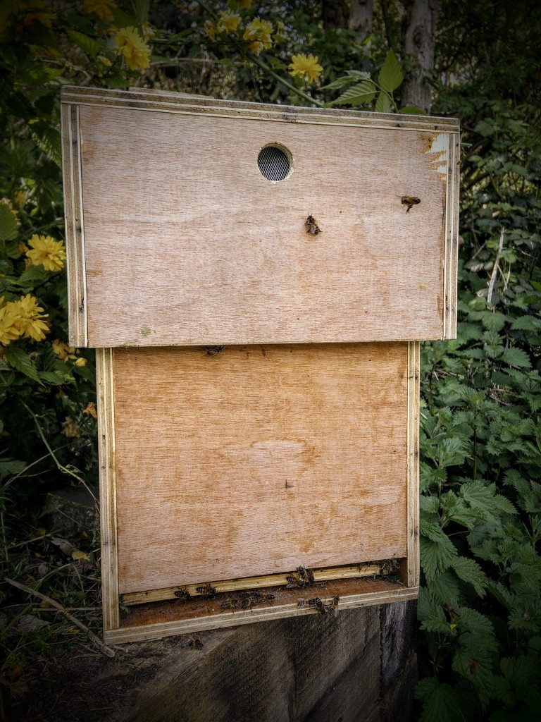 A newly made nucleus hive